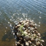 Лето, солнце, озеро...