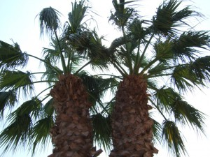 Просто пальмы :)